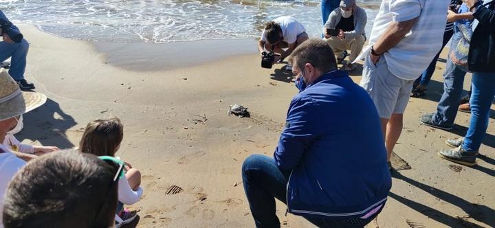 El director general del Medio Natural, durante la suelta de una de las tortugas criadas por la Comunidad tras su nacimiento hace un año en Calbla...
